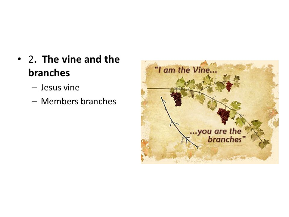 2. The vine and the branches