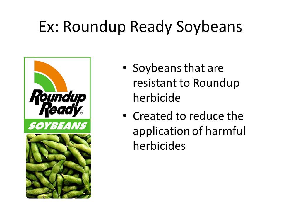 Ex: Roundup Ready Soybeans