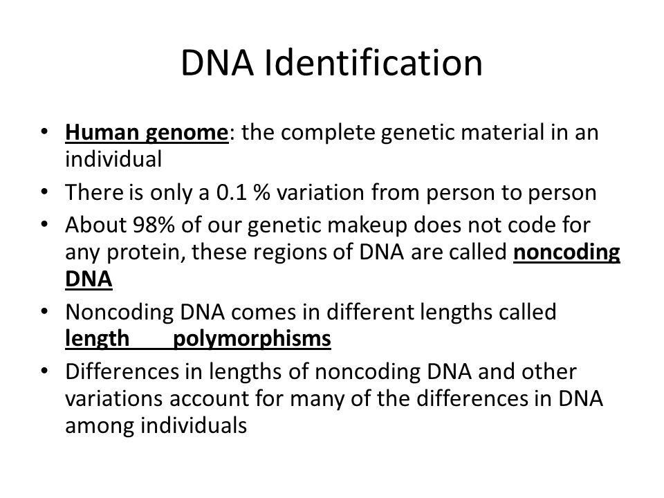 DNA Identification Human genome: the complete genetic material in an individual. There is only a 0.1 % variation from person to person.