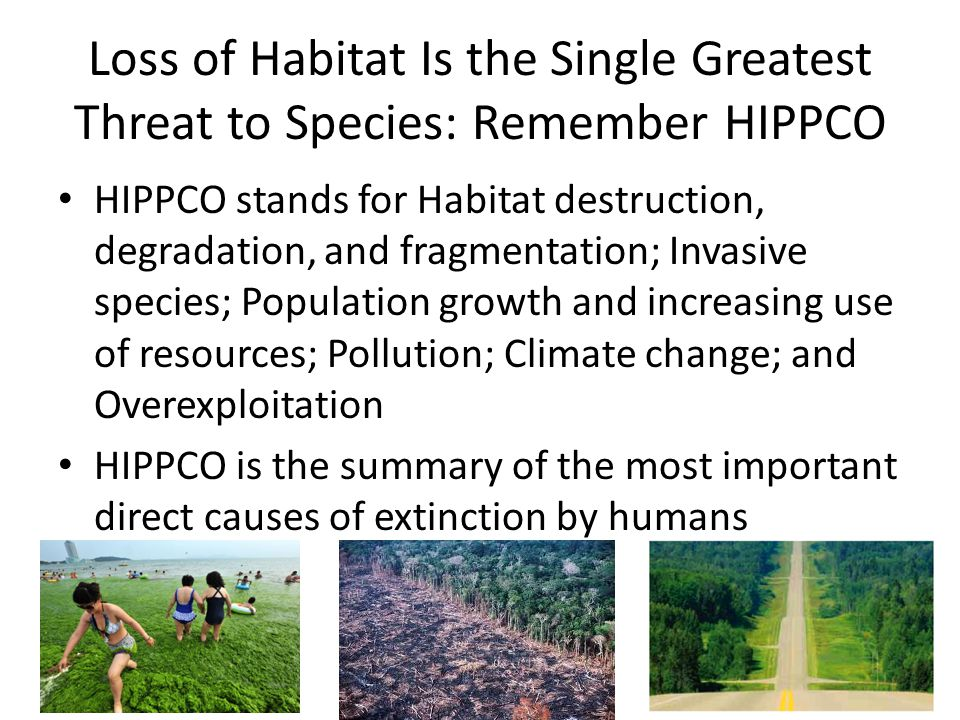 Loss of Habitat Is the Single Greatest Threat to Species: Remember HIPPCO