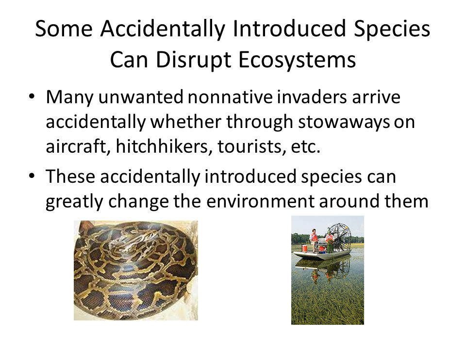Some Accidentally Introduced Species Can Disrupt Ecosystems