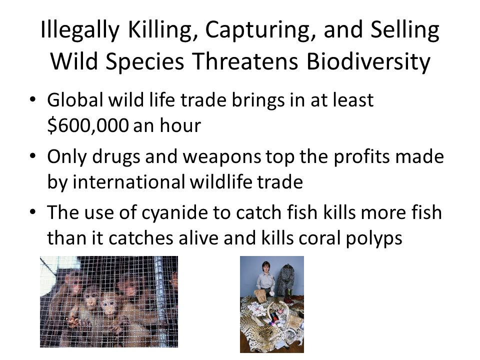 Illegally Killing, Capturing, and Selling Wild Species Threatens Biodiversity