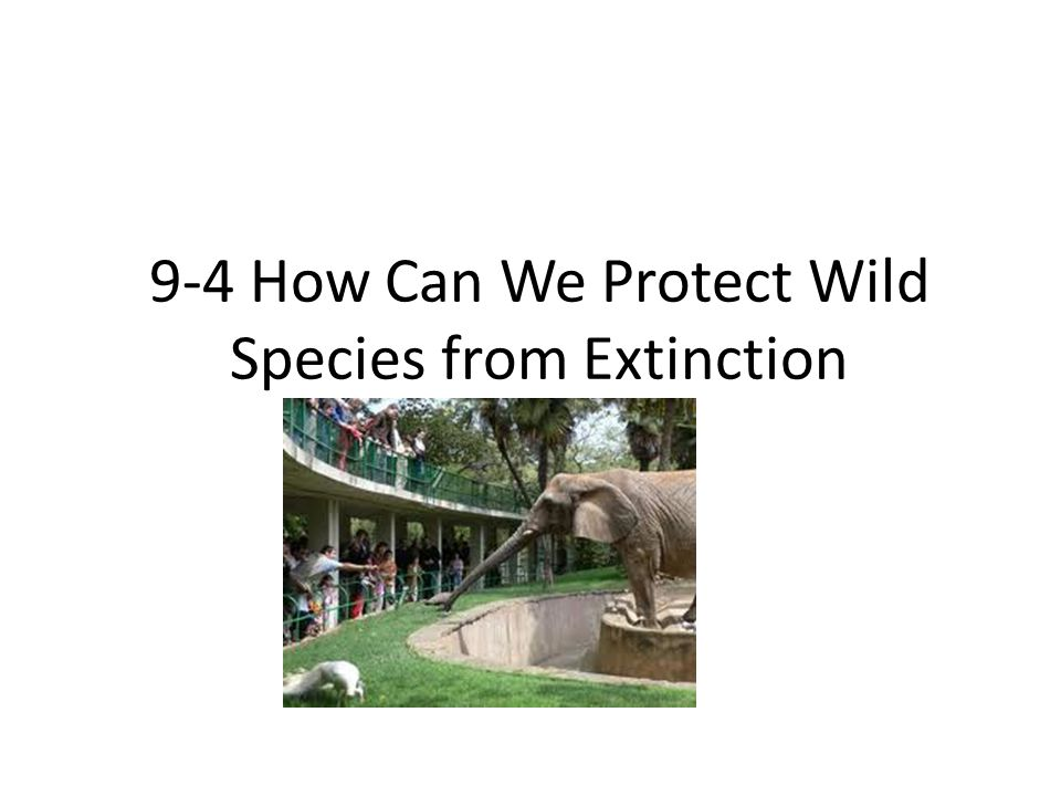 9-4 How Can We Protect Wild Species from Extinction