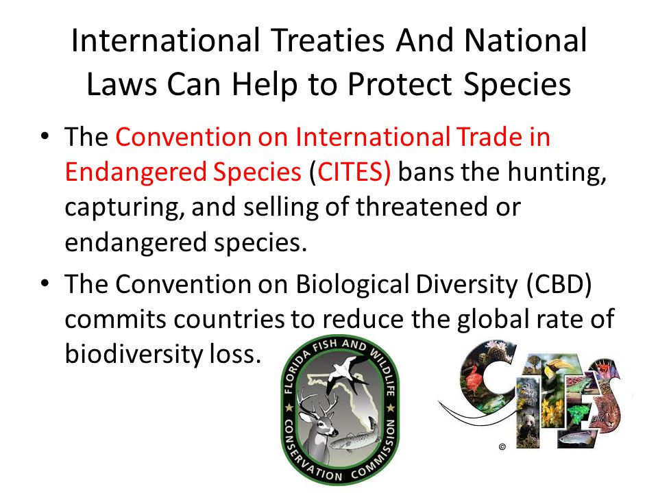 International Treaties And National Laws Can Help to Protect Species