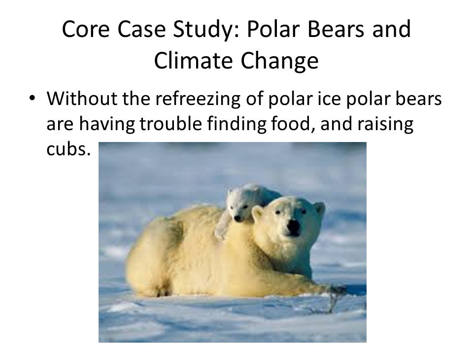 Core Case Study: Polar Bears and Climate Change