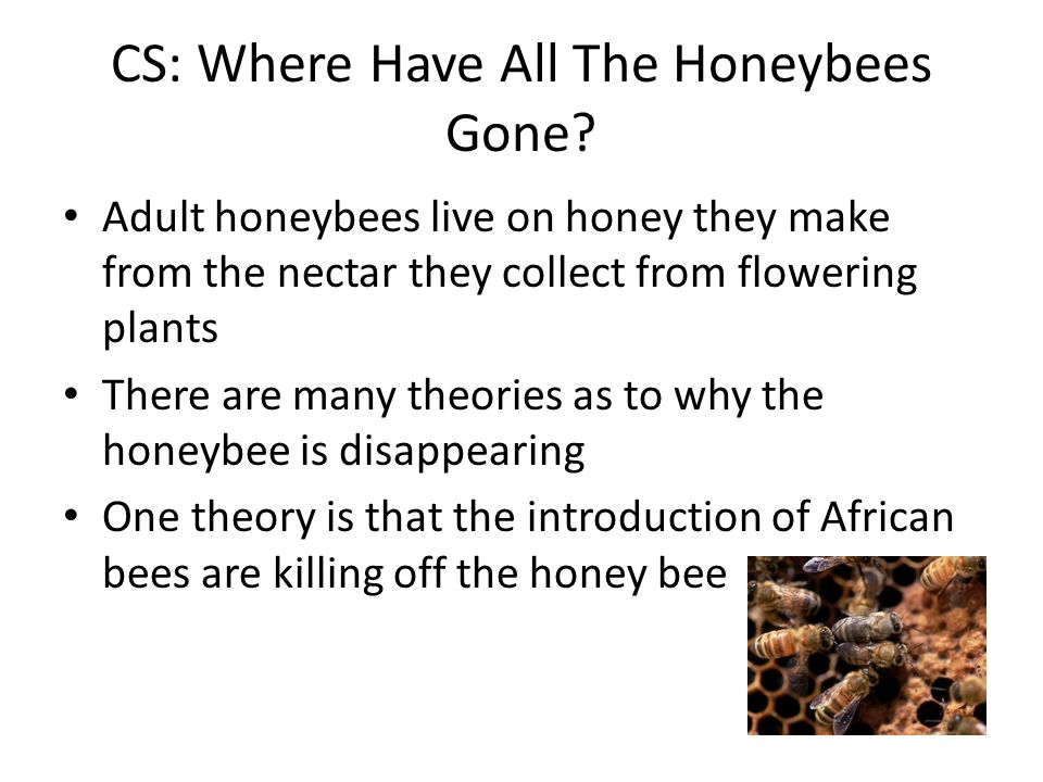 CS: Where Have All The Honeybees Gone