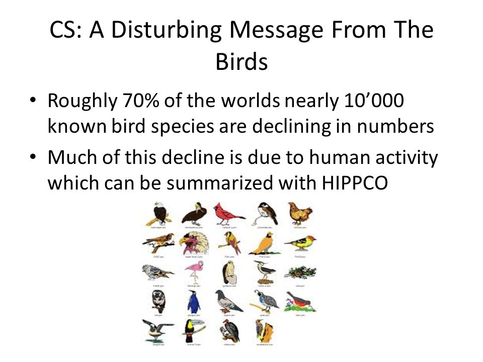 CS: A Disturbing Message From The Birds