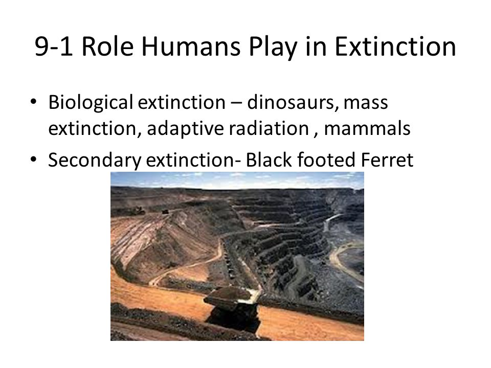 9-1 Role Humans Play in Extinction