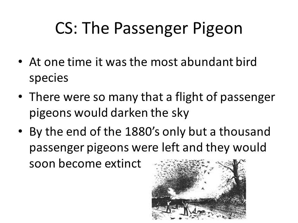 CS: The Passenger Pigeon