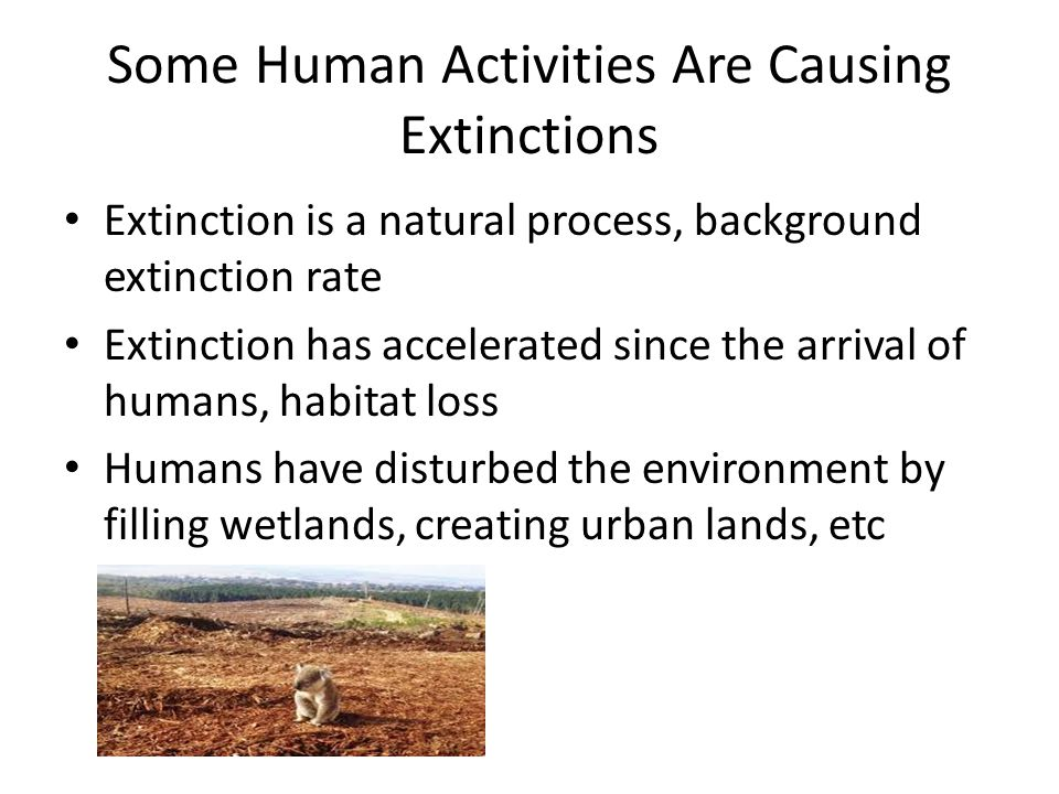Some Human Activities Are Causing Extinctions