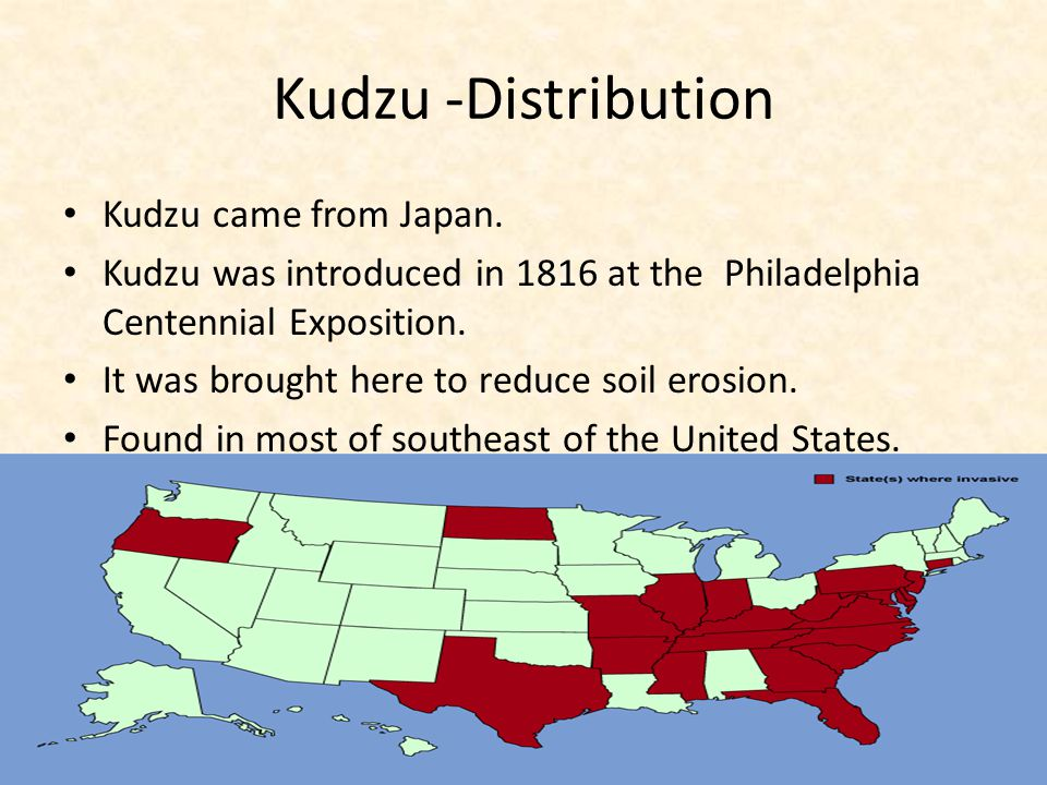 Kudzu -Distribution Kudzu came from Japan.