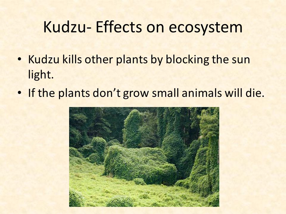 Kudzu- Effects on ecosystem