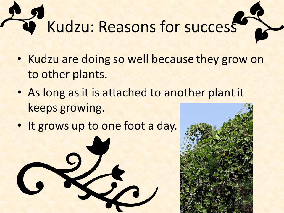 Kudzu: Reasons for success
