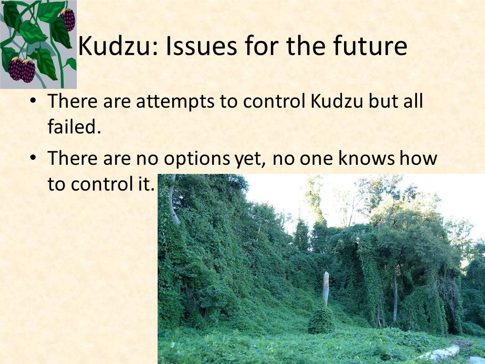 Kudzu: Issues for the future