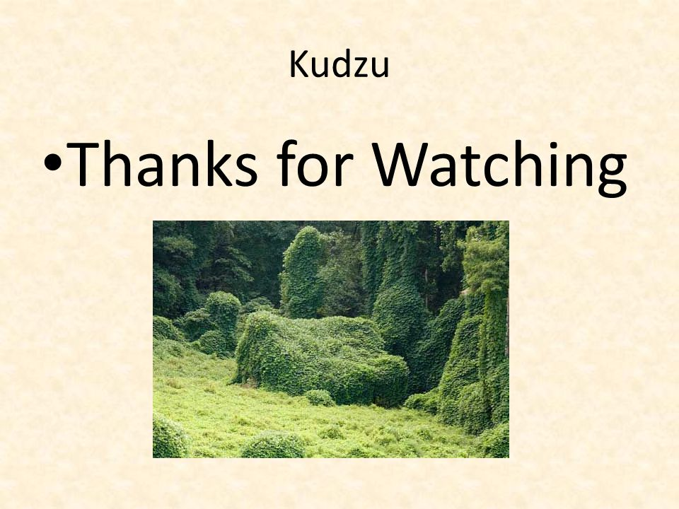 Kudzu Thanks for Watching