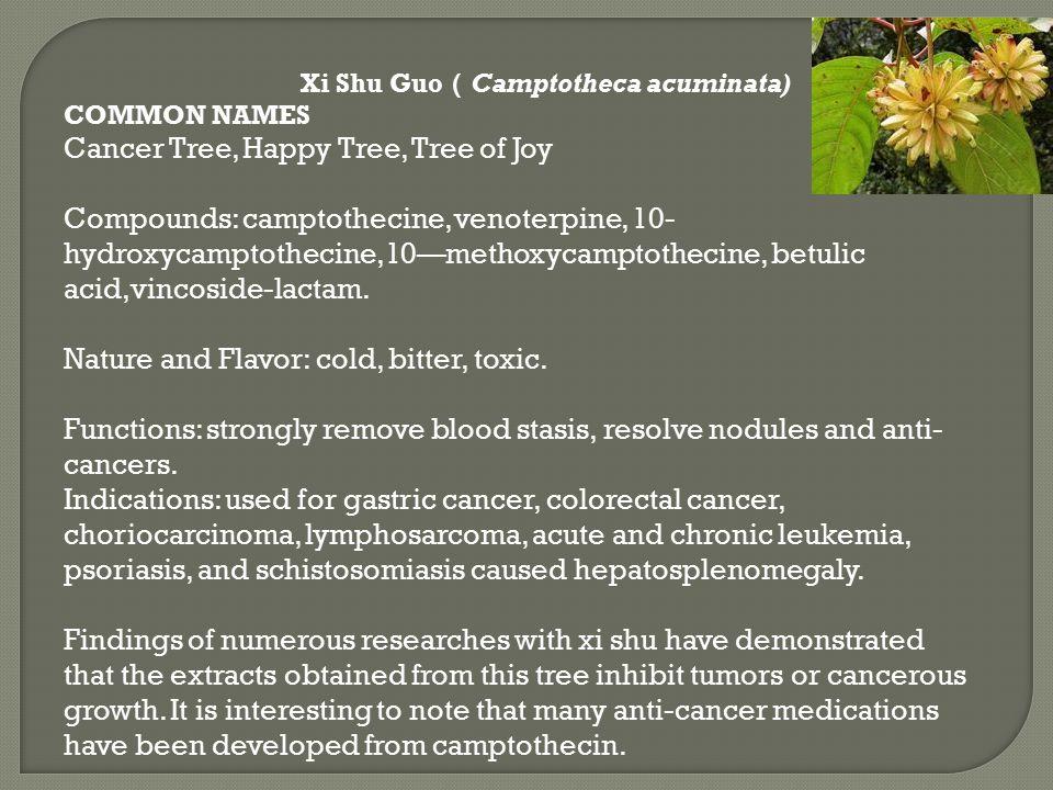 Cancer Tree, Happy Tree, Tree of Joy