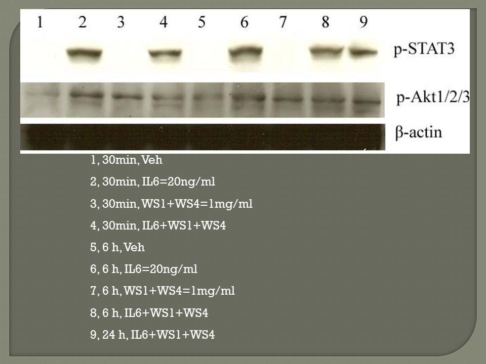 1, 30min, Veh 2, 30min, IL6=20ng/ml. 3, 30min, WS1+WS4=1mg/ml. 4, 30min, IL6+WS1+WS4. 5, 6 h, Veh.