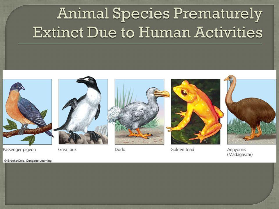 Animal Species Prematurely Extinct Due to Human Activities