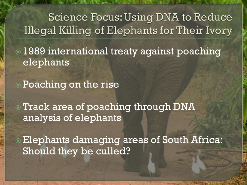 Science Focus: Using DNA to Reduce Illegal Killing of Elephants for Their Ivory