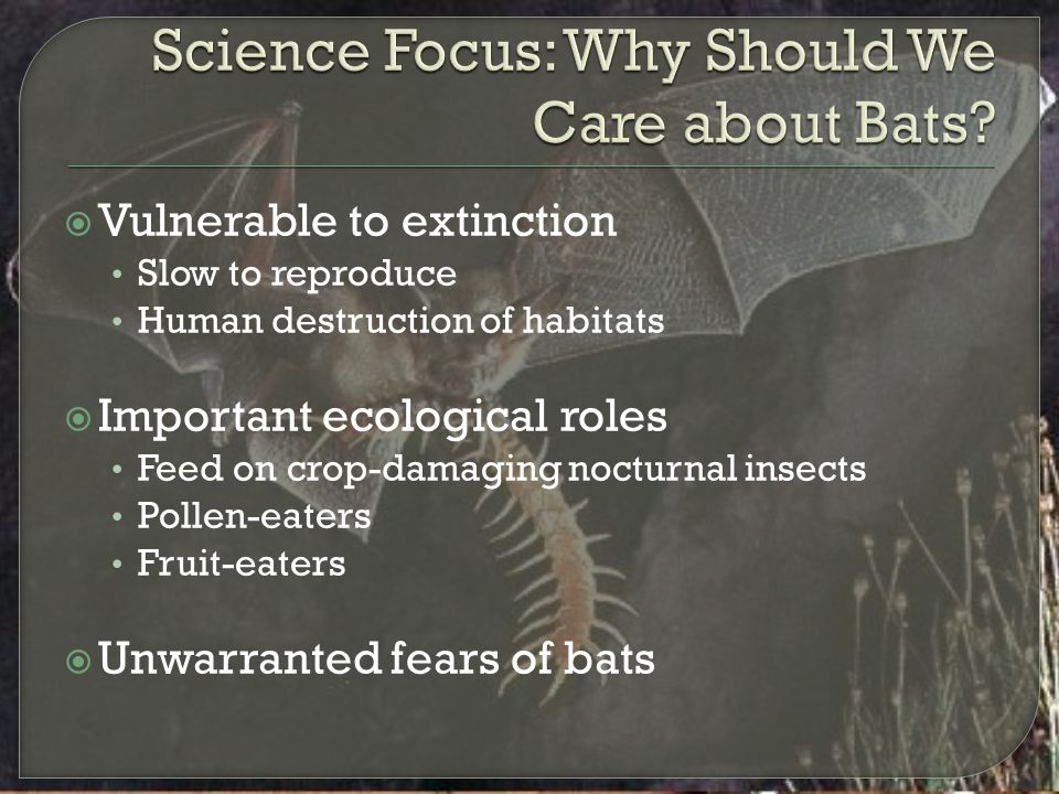 Science Focus: Why Should We Care about Bats