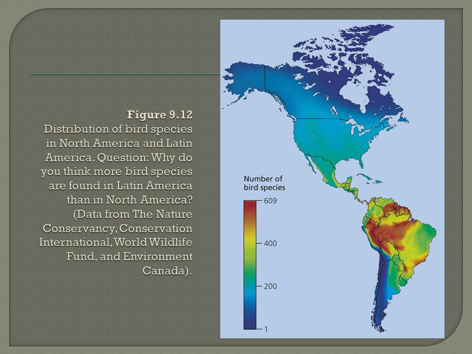 Figure 9.12 Distribution of bird species in North America and Latin America.