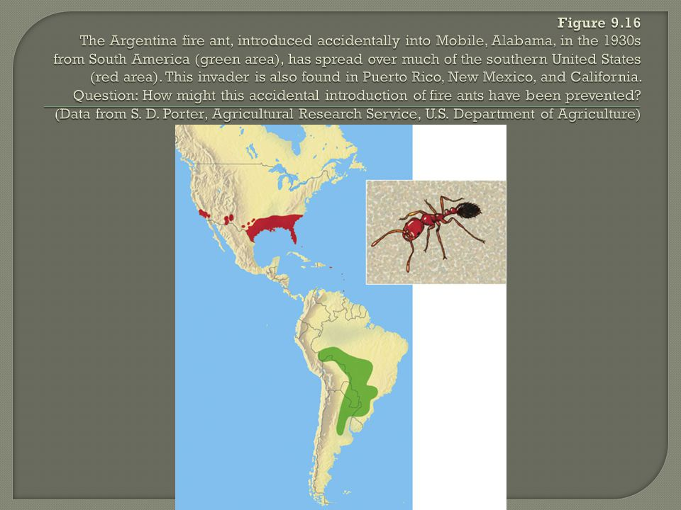 Figure 9.16 The Argentina fire ant, introduced accidentally into Mobile, Alabama, in the 1930s from South America (green area), has spread over much of the southern United States (red area).
