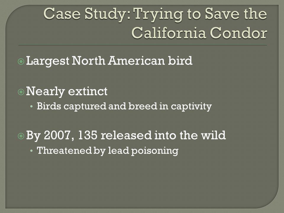 Case Study: Trying to Save the California Condor