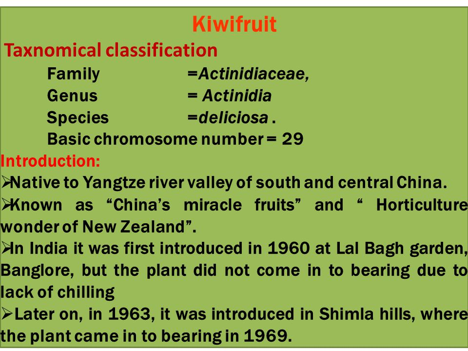 Kiwifruit Taxnomical classification Family =Actinidiaceae,