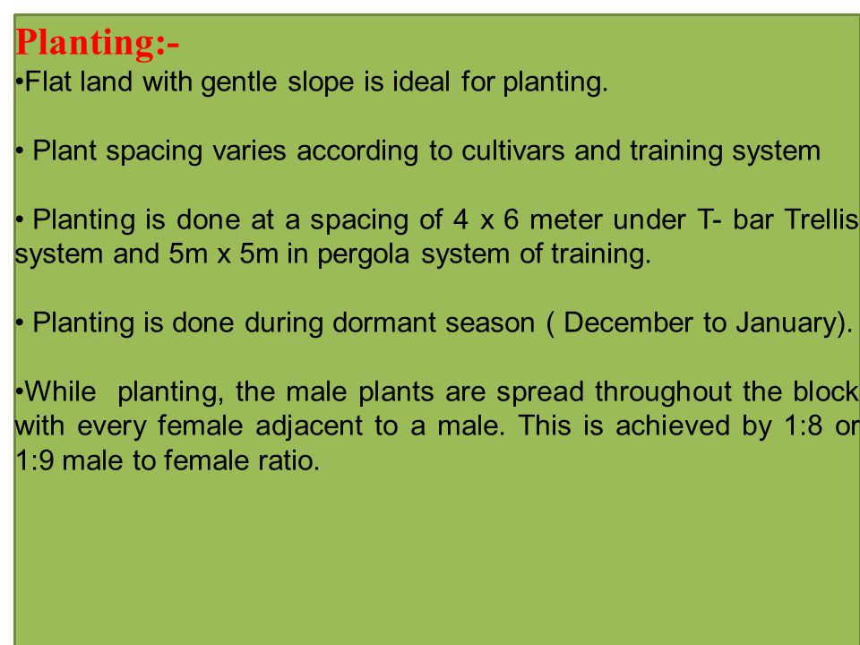 Planting:- Flat land with gentle slope is ideal for planting.