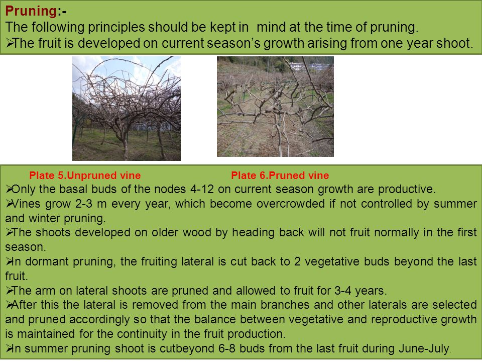Pruning:- The following principles should be kept in mind at the time of pruning.