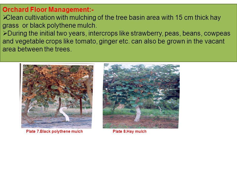 Orchard Floor Management:-