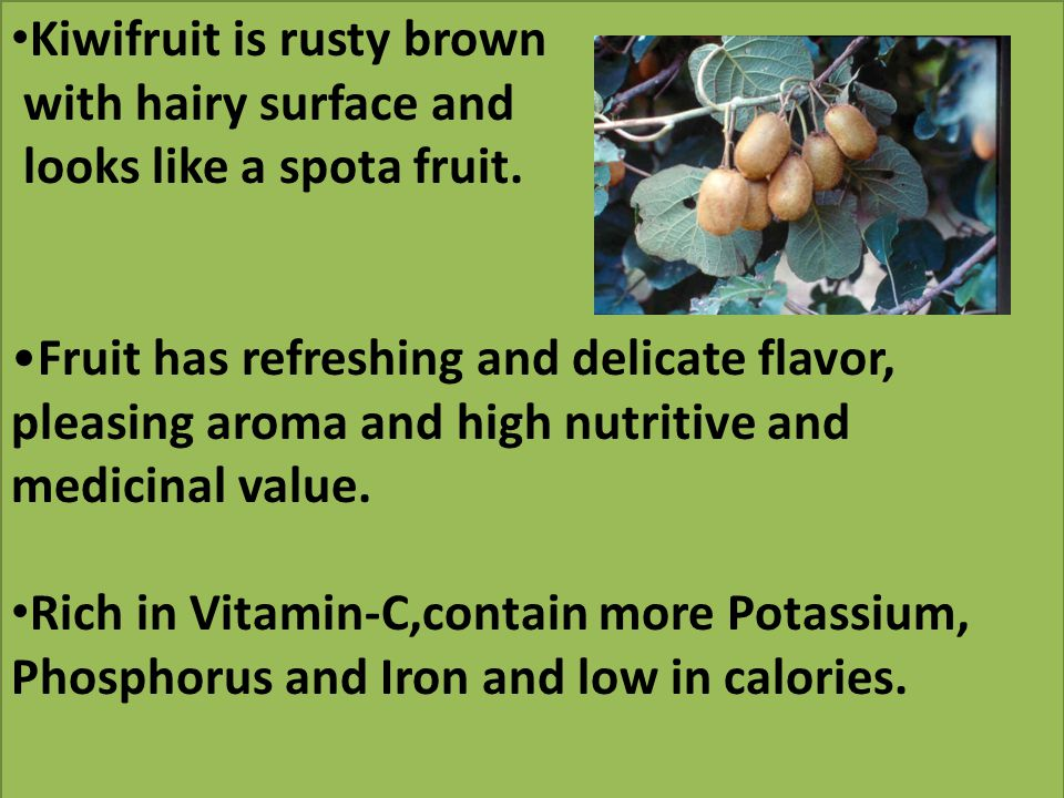 Kiwifruit is rusty brown