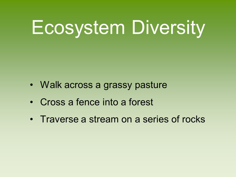 Ecosystem Diversity Walk across a grassy pasture