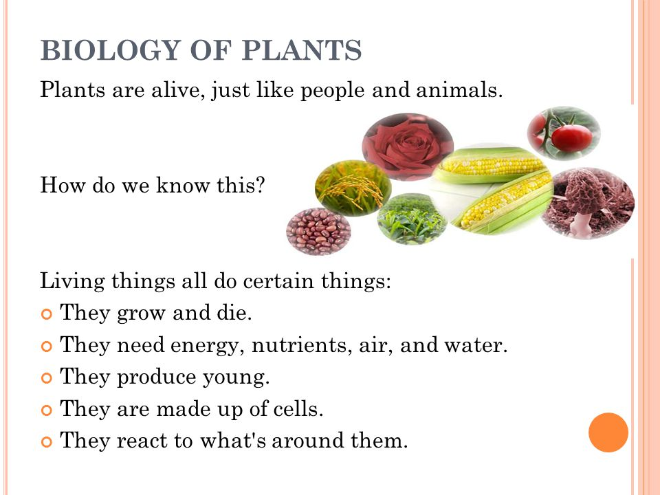 BIOLOGY OF PLANTS Plants are alive, just like people and animals.