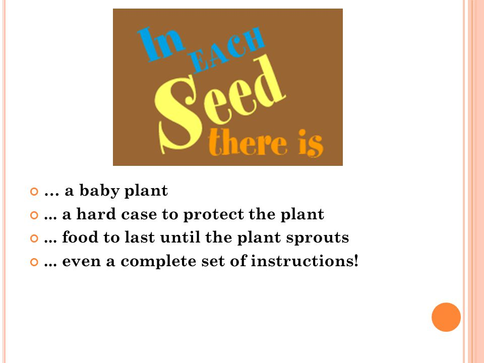 … a baby plant ... a hard case to protect the plant.