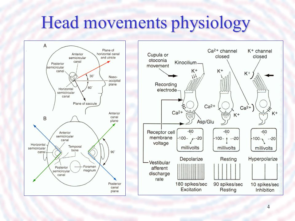 Head movements physiology