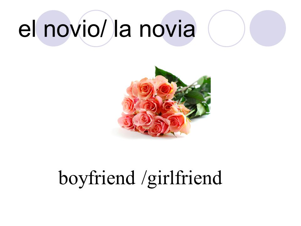 el novio/ la novia boyfriend /girlfriend