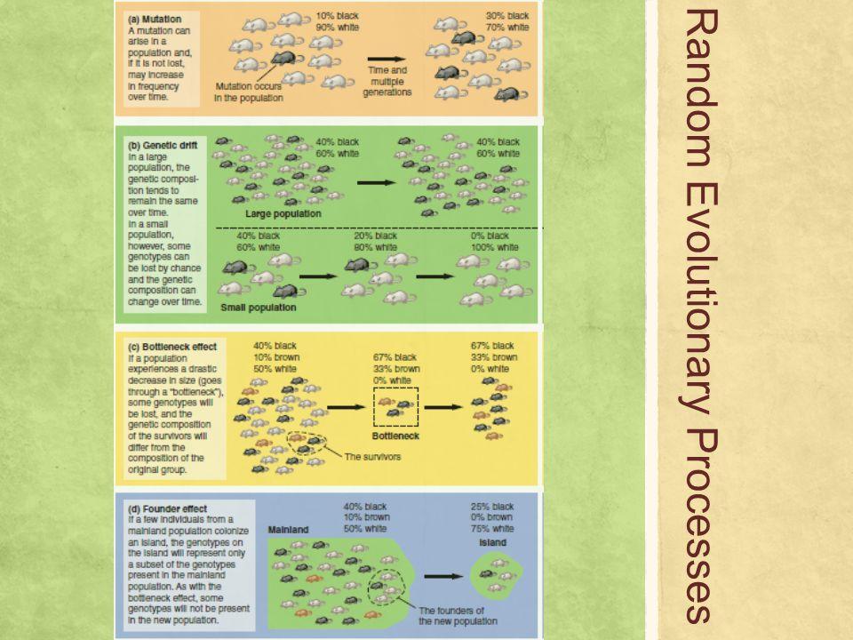 Random Evolutionary Processes
