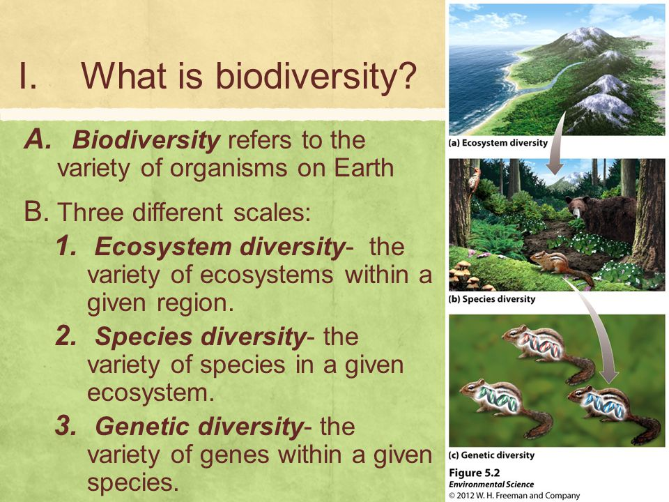 What is biodiversity Biodiversity refers to the variety of organisms on Earth. Three different scales:
