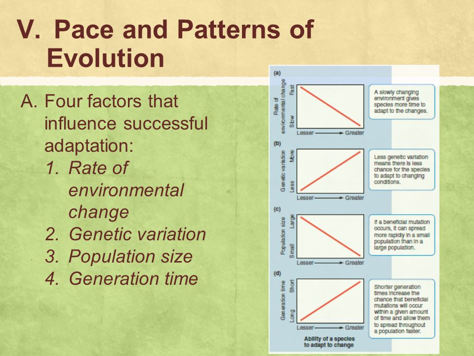 Pace and Patterns of Evolution