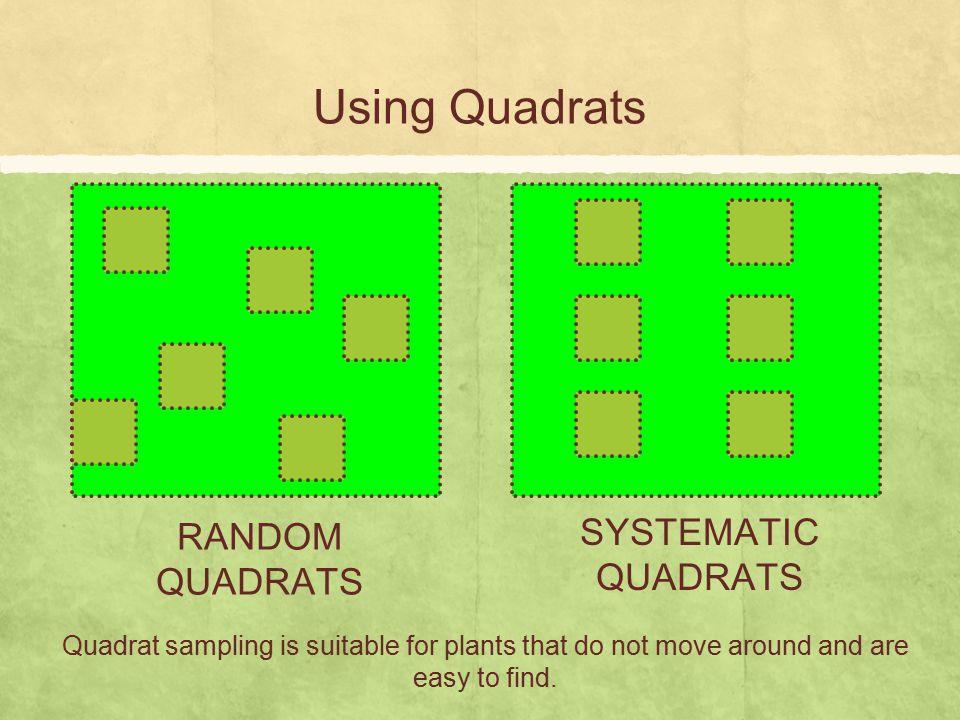 Using Quadrats SYSTEMATIC QUADRATS RANDOM QUADRATS