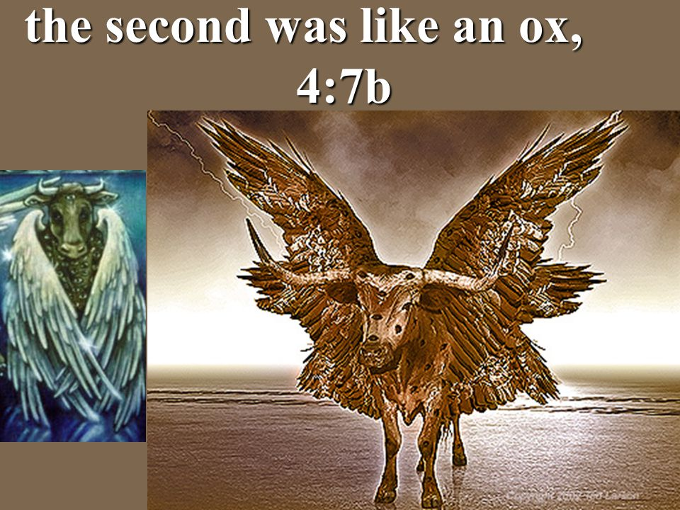 the second was like an ox, 4:7b