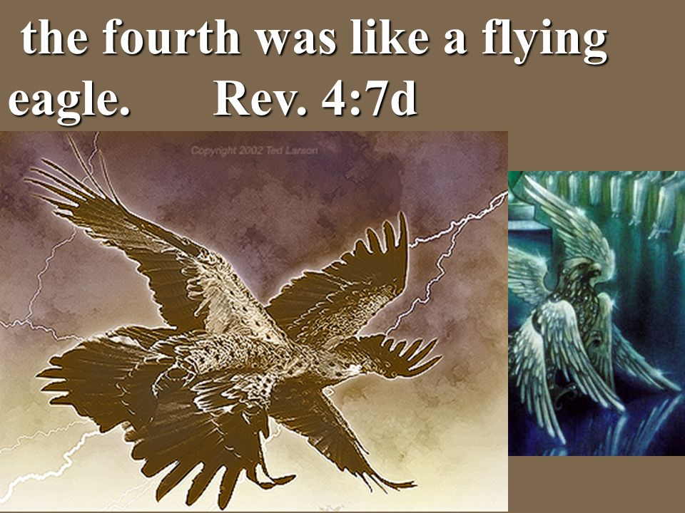 the fourth was like a flying eagle. Rev. 4:7d