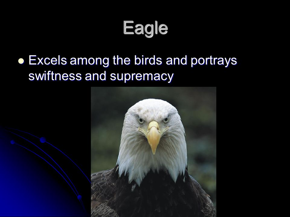 Eagle Excels among the birds and portrays swiftness and supremacy