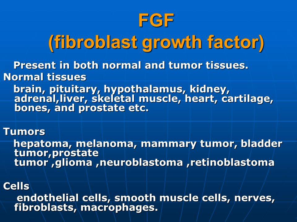 FGF (fibroblast growth factor)