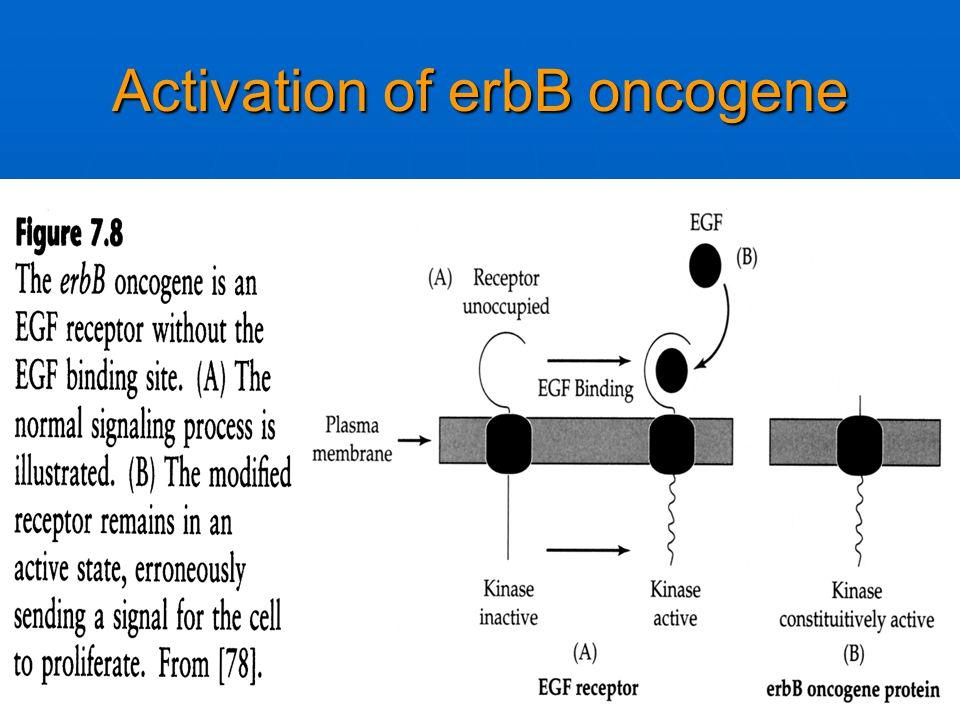 Activation of erbB oncogene