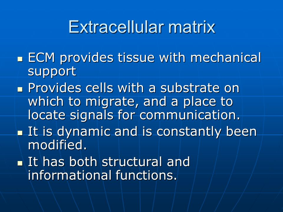 Extracellular matrix ECM provides tissue with mechanical support