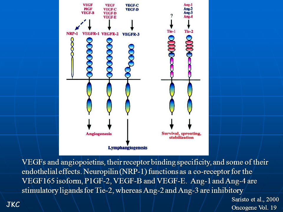 VEGFs and angiopoietins, their receptor binding specificity, and some of their endothelial effects. Neuropilin (NRP-1) functions as a co-receptor for the VEGF165 isoform, P1GF-2, VEGF-B and VEGF-E. Ang-1 and Ang-4 are stimulatory ligands for Tie-2, whereas Ang-2 and Ang-3 are inhibitory