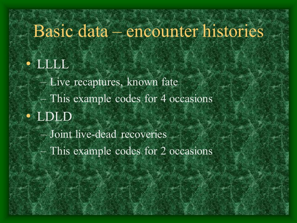 Basic data – encounter histories