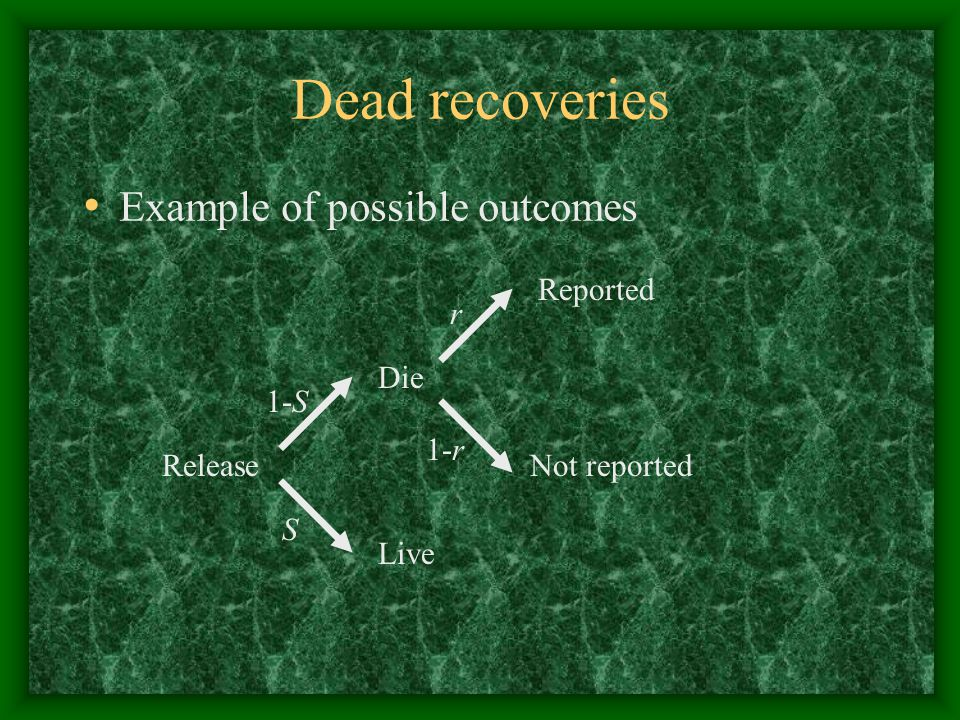 Dead recoveries Example of possible outcomes Reported Not reported